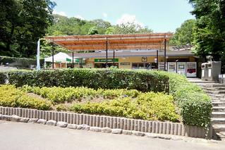 Image of コアラ near Hino. zoo 動物園 tamazoo tamazoologicalpark 多摩動物園