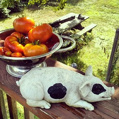 Today's #tomato harvest and #pig #fun  #igrewit #deck #summer #containergarden #yumo #food