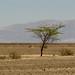 A tree for Hope. Nasca Lines, Nasca, Peru 14APR12