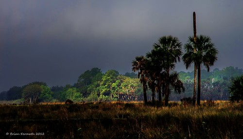 mist fog sunrise palms landscapes florida centralflorida cabbagepalms