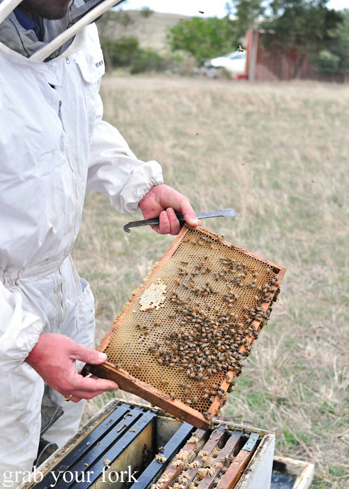 Bee hive Honey Super box at Buzz Honey Bee Farm height=