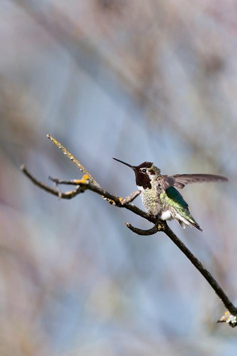 042112_01_bird_hummingbird03