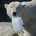Karfreitagsspaß für Eisbär Lloyd