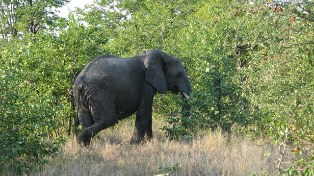 Elephant at Timbavati, South Africa