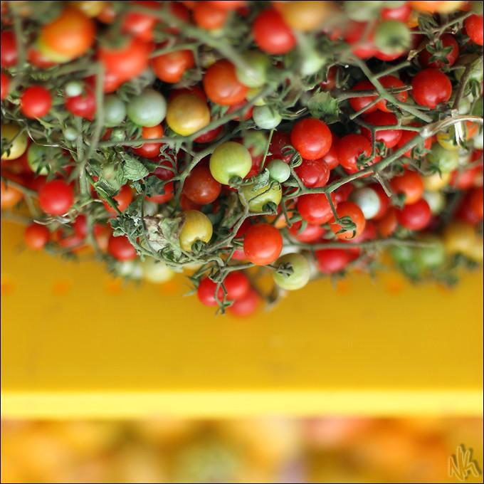 IMAGE: http://farm9.staticflickr.com/8010/7240288854_2196245301_b.jpg
