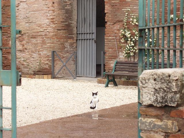 Domus Aurea Excavations and Kitty