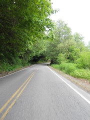 A tree-lined tunnel on Timber Road, north of highway 26