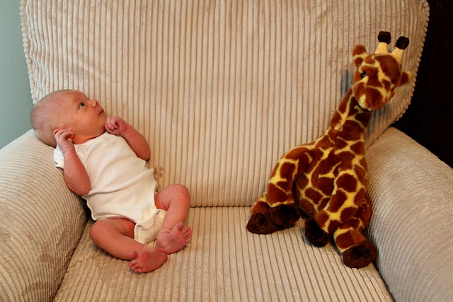 M vs. Giraffe Week 1