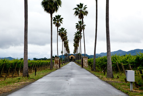 The road to Round Pond Estate Winery
