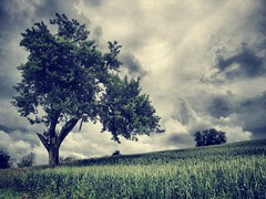 [Free Images] Nature, Field / Farm, Trees, Wheat, Landscape - Germany ID:201206211200