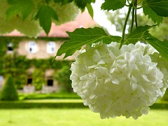 White Flower Thing
