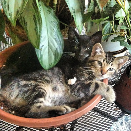 A bowl of kitties