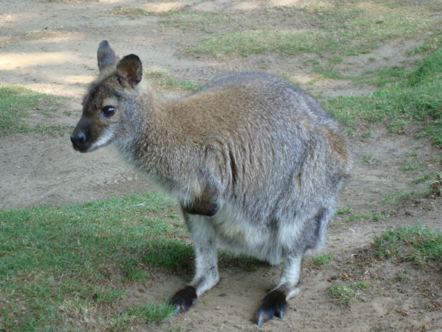 Week 25 - Australia