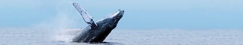 whale23