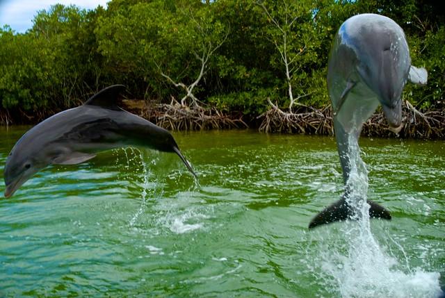 anteketborka.blogspot.com, dauphins17
