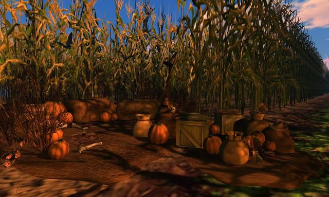 The Corn Field - 03