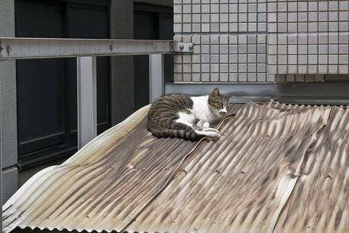 Cat_2012-07-06N02