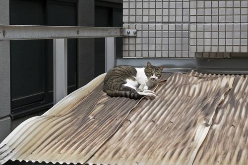 Cat_2012-07-06N03