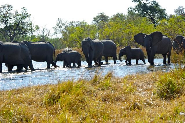 moremi game reserve, botswana, africa