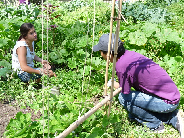 Weeding in the Children's Garden. Photo by Kathryn Littlefield.