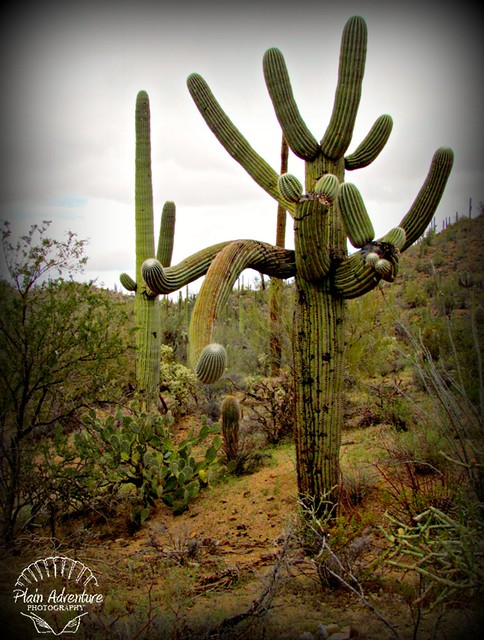 7619354280 4c8fd7e2aa z Saguaro National Park West