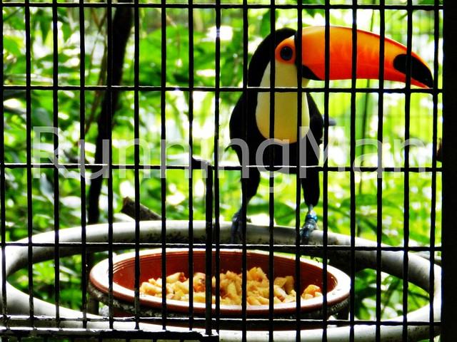 Jurong Bird Park 04