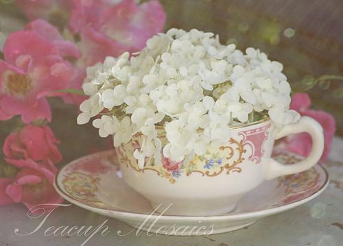 Flower Blossom Tea