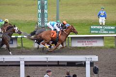 Horse Race #3
