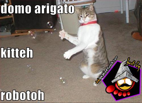 gambar kucing 12