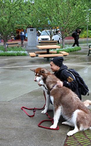 Juneau - Tourist and Sled Pups