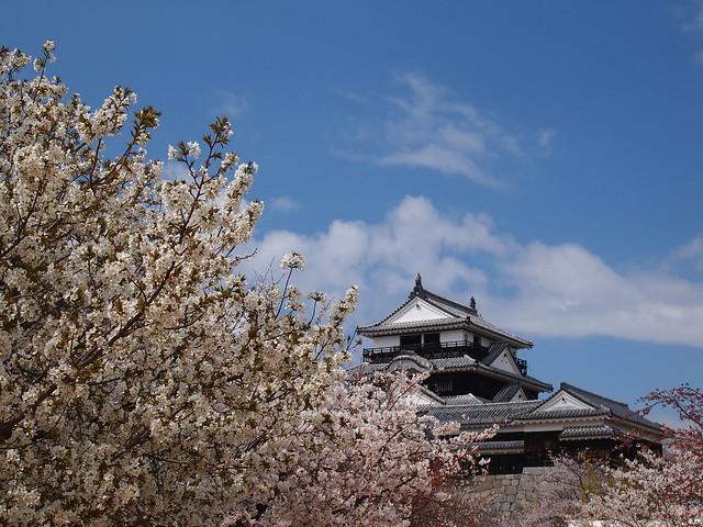 Matsuyama Castle with Sakura