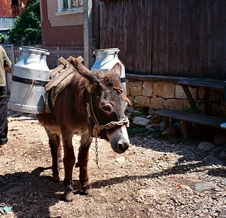Loaded donkey