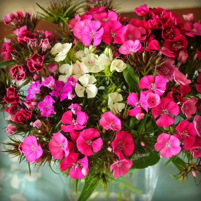 Flowers.4.23.2012