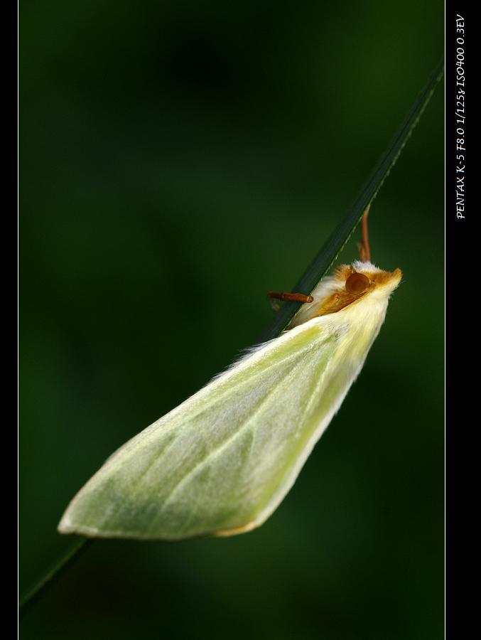 健行,賞桐,拍昆蟲