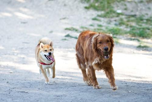 Dog Park 024