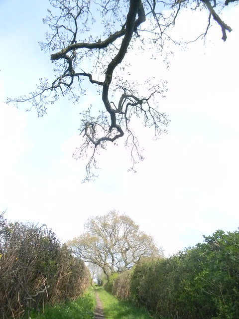 Tree and branch