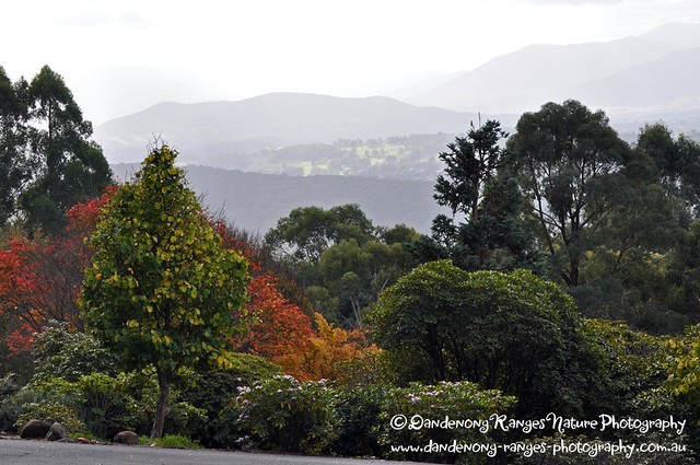 A view of the Yarra Ranges