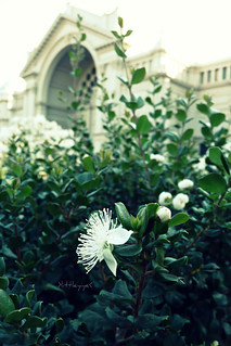 Imagen de Royal Exhibition Building and Carlton Gardens. flowers white green gardens carlton crossprocess australia melbourne retro vic picnik royalexhibitionbuilding piknic tz3