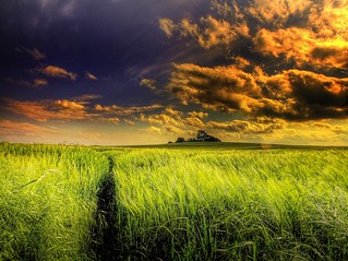 Another wheat field