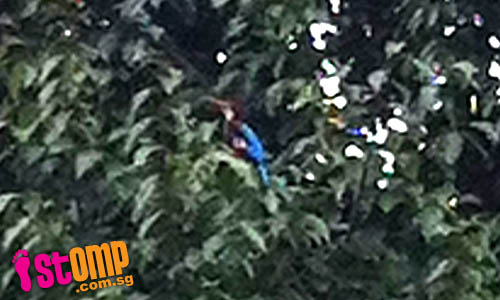 Is this a rare species? Unusual blue-plumed bird spotted on tree in Bukit Gombak