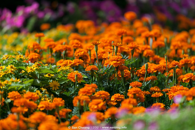 flower_Tapseac-0202