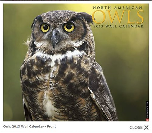 2013 Owls Calendar by Megan Lorenz