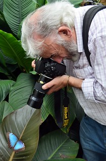 Ray capturing A Blue Morpho