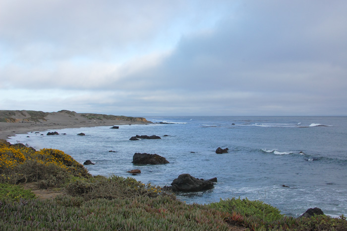 @ Elephant Seal Lookout