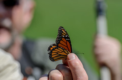 Butterfly in Hand_7783.jpg by Mully410 * Images