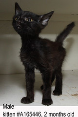 male #A165446 2 month old