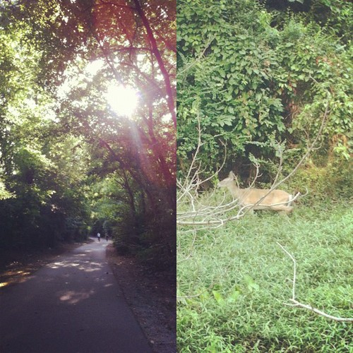 Saw two deer on our run. So cool!
