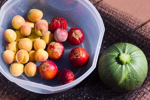 Fruit & squash