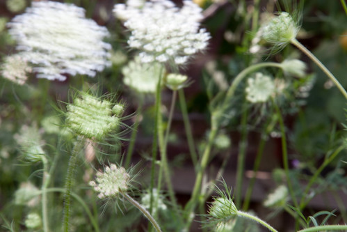 Zitternde Pflanzen; copyright 2012: Georg Berg