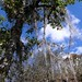Aerófitas y bromelias - Aerophytes and bromeliads; área al sur de La Cieneguilla, Región Mixteca, Oaxaca, Mexico por Lon&Queta